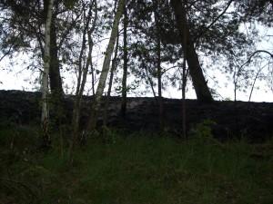 2011-04-29 Einsatz Mittelbrand (1)