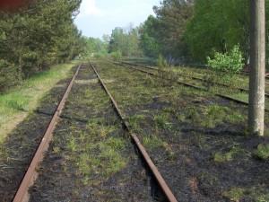 2011-04-29 Einsatz Mittelbrand (3)