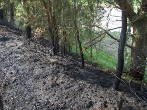 2011-04-29 Einsatz Mittelbrand (4)