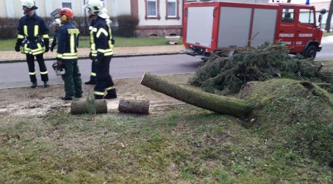 2015/03/31 Kleineinsatz Baum auf Straße Pretzsch
