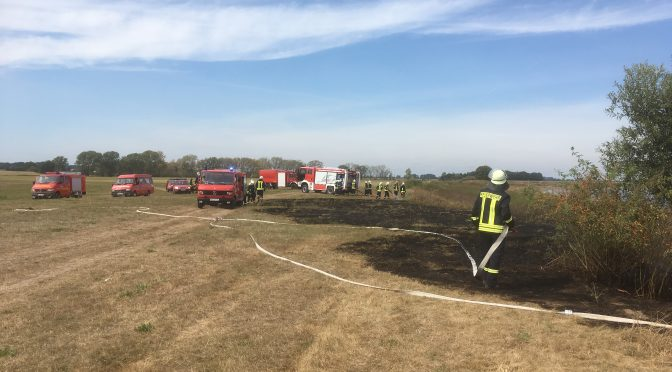 2016/09/03 Flächenbrand Elbwiesen