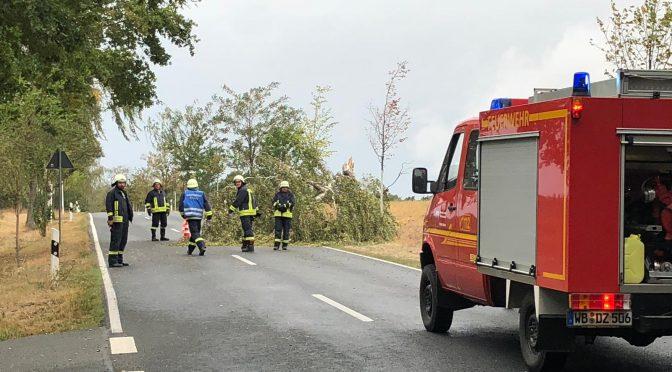 2018/9/21 Einsatz TH klein 1 Lausiger Teiche Sturm